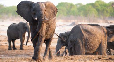 Empfohlene Individualreise, Rundreise: Masai Mara, Meru und Diani Beach – Kenia Safarireise und Strandurlaub