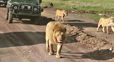 Example private tour: Exploring Eastern South Africa