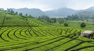 Example private tour: Simply Sri Lanka: Temples and Tea