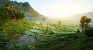 Empfohlene Individualreise, Rundreise: Kultur, Abenteuer und Natur auf Java und Bali