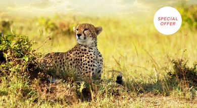 Example private tour: Authentic Tanzania – Wildlife & Pristine Beach