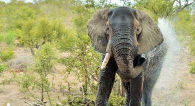 Empfohlene Individualreise, Rundreise: Sambia und Südafrika: Kapstadt, Safari und Viktoriafälle