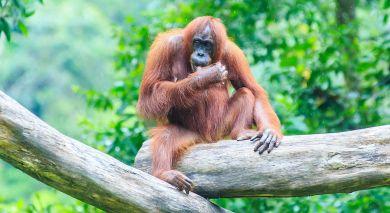 Empfohlene Individualreise, Rundreise: Wildnis & Strände Malaysias