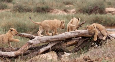 Example private tour: South Africa: Western Cape and Kruger