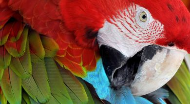 Example private tour: Birdwatcher's Bliss, Guatemala