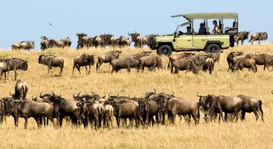 Example private tour: Wild Treasures of Northern Tanzania