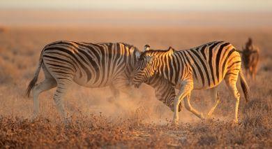 Empfohlene Individualreise, Rundreise: Familienreise durch Namibia für Selbstfahrer: Die Höhepunkte des Nordens