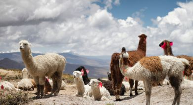 Example private tour: Peru: Highlights of the North