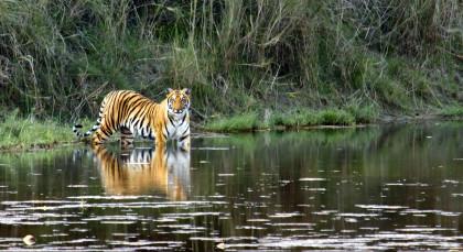 Pench in Zentral- & Westindien