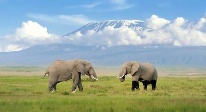 Kilimanjaro in Tansania