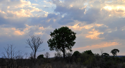 Destination Hwange in Zimbabwe
