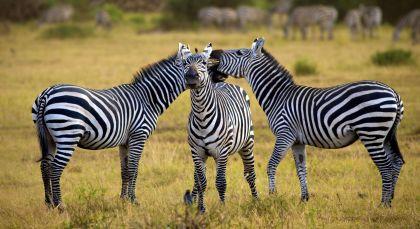 Destination Arusha in Tanzania