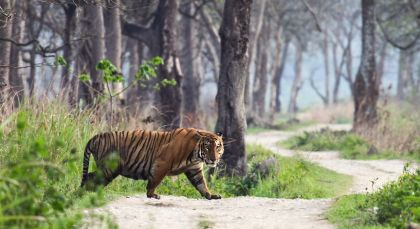 Ranthambore in Nordindien