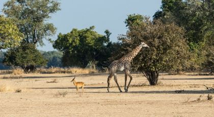 South Luangwa in Sambia