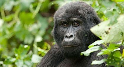 Rwanda Tours in Africa