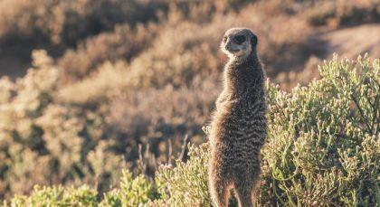 Little Karoo in Südafrika