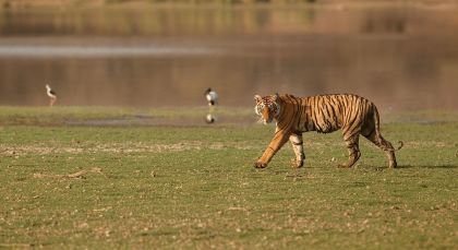 Destination Bandhavgarh in North India