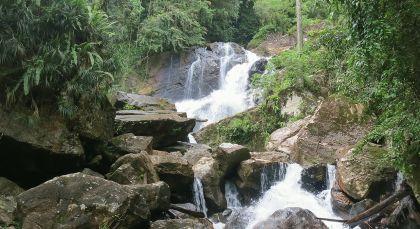 Regenwald in Sri Lanka