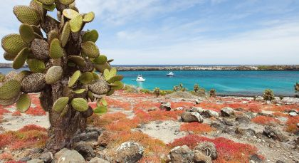 Destination Isla Santa Cruz in Ecuador/Galapagos