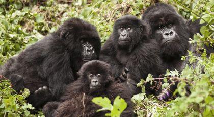 Volcanoes Nationalpark in Ruanda