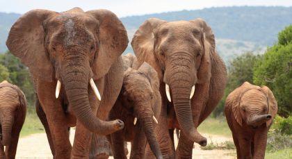 Eastern Cape Wildschutzgebiete in Südafrika