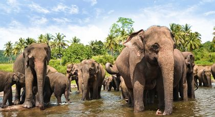 Destination Yala in Sri Lanka