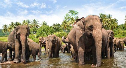 Destination Yala in Sri Lanka