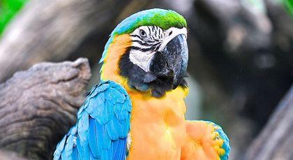 Reiseziel Amazonas in Brasilien