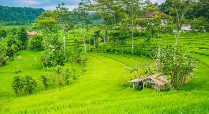 Sidemen in Indonesien