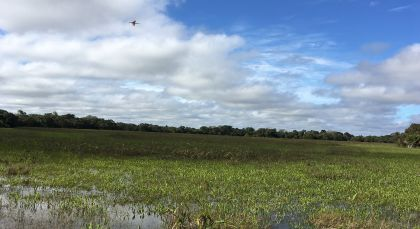 Destination Pantanal South in Brazil