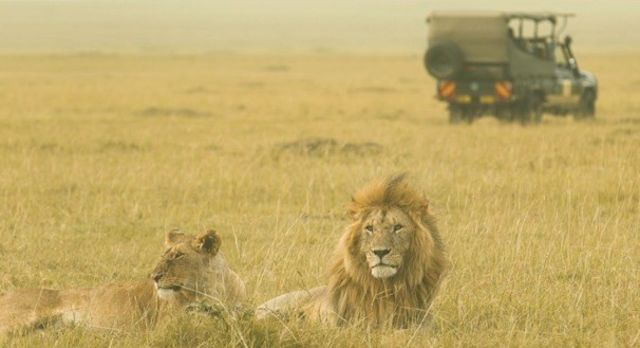 Tierreisen & Safaris Rundreisen