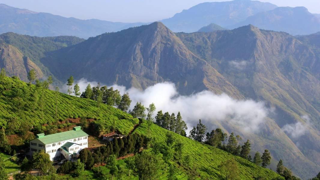 Tea Plantation in Kerala