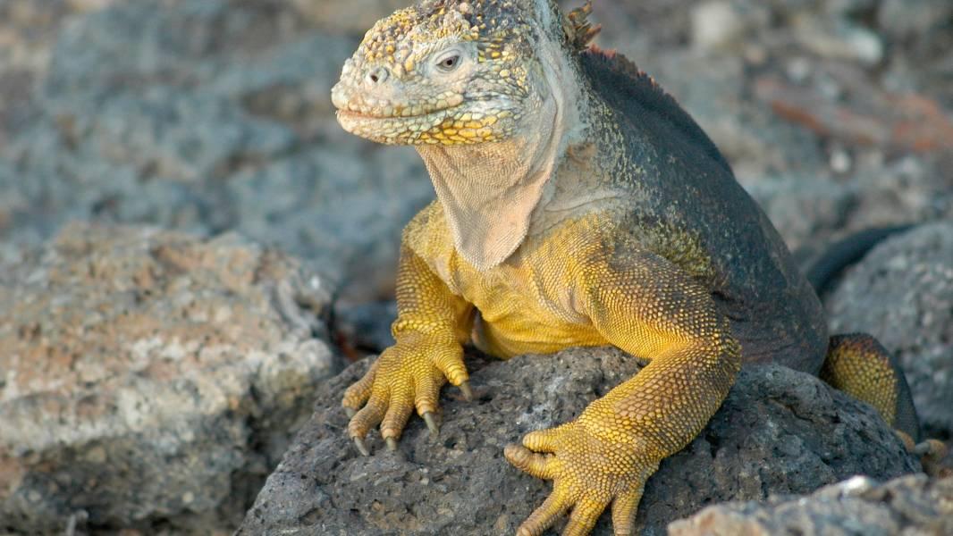 a lizard on a rock