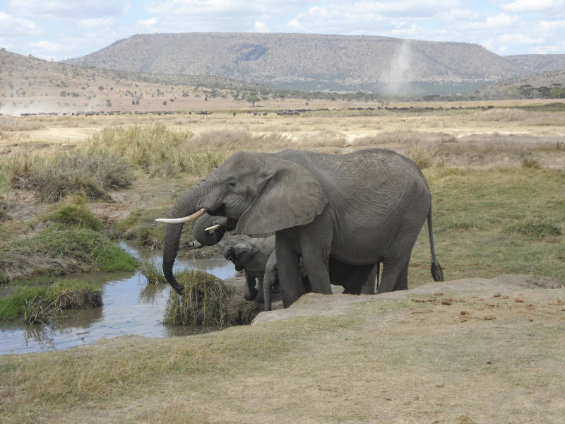 a large elephant standing next to a body of water