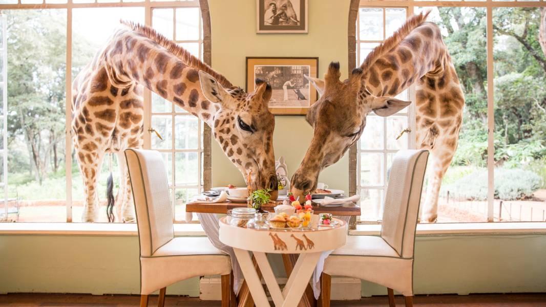 a person feeding a giraffe