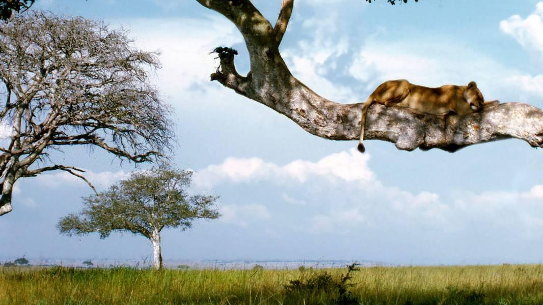 a giraffe standing next to a tree