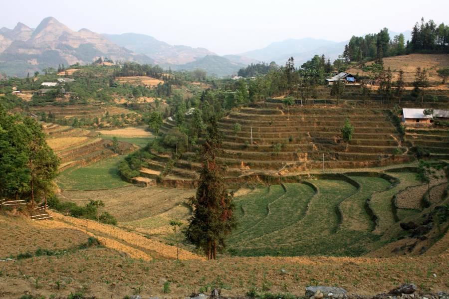Bac Ha fields
