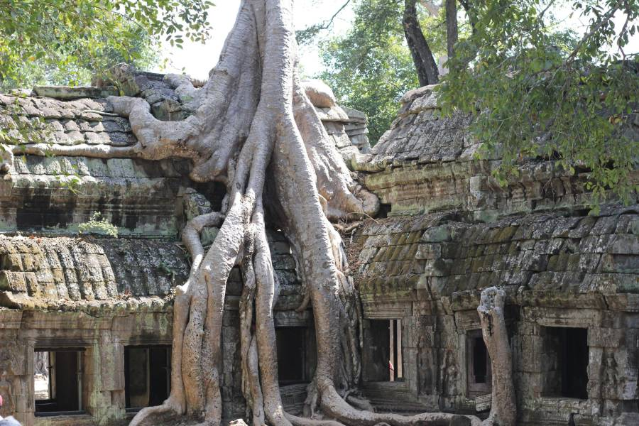 a tree in front of a large rock with Angkor Wat in the background