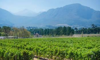 Vineyard at Mont Rochelle Hotel