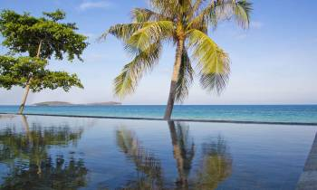 a palm tree in front of a body of water