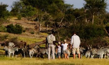Zebra spotting on family safari