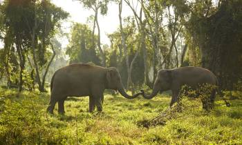 a herd of elephants standing on top of a lush green field