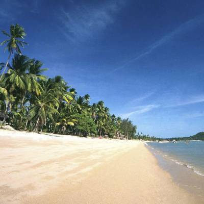 a beach with palm trees and a body of water