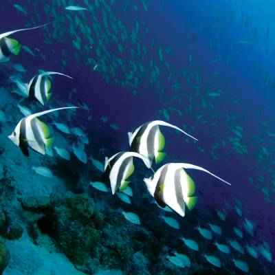 Marine life, Seychelles