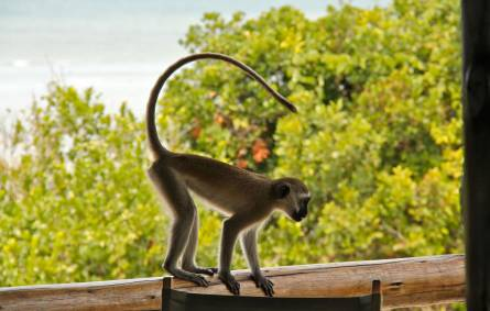 a monkey standing on top of a wooden fence