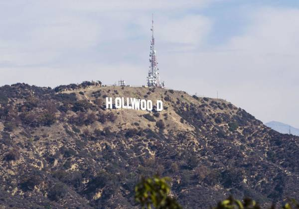 a tree with Hollywood Sign in the background