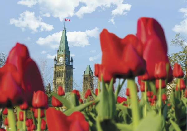 Spring Tulips and Parliament Hill