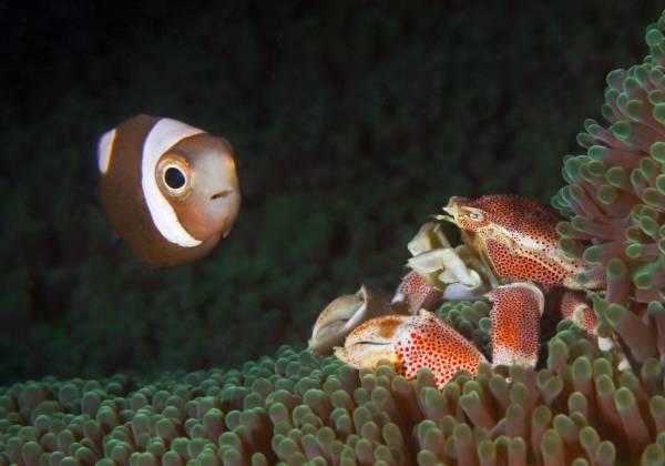 Mindoro Puerto Galera Fish