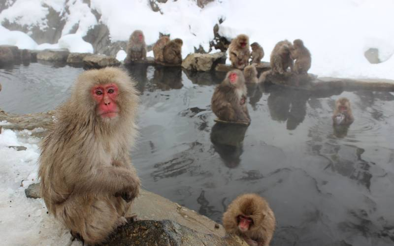 a monkey sitting on a pile of snow