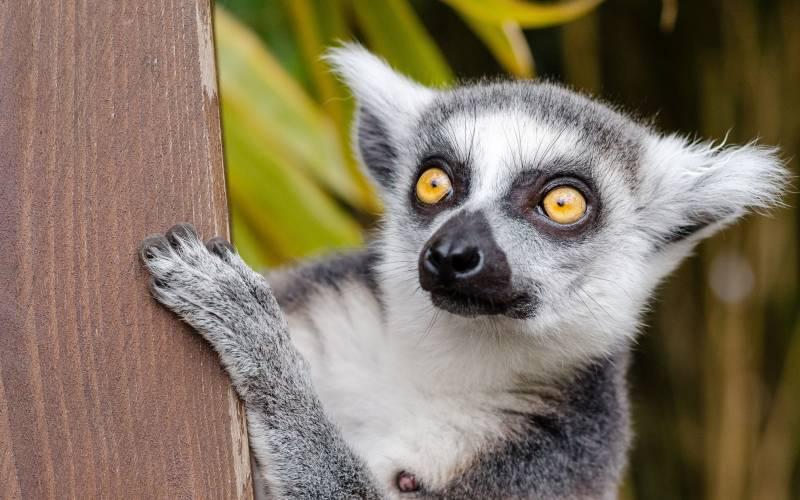 a close up of an animal